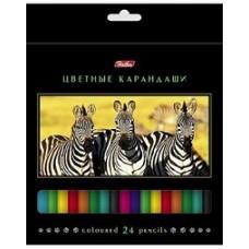 Карандаши цветные Hatber 24 цвета. Дикий мир. С заточкой