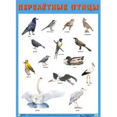 Перелетные птицы. Плакат. 500x690 мм