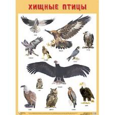 Хищные птицы. Плакат. 500x690 мм