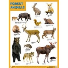 FOREST ANIMALS. Лесные обитатели. Плакат на английском языке. 440x590 мм