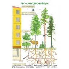 Лес - многоэтажный дом. Плакат. 500x690 мм