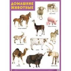 Домашние животные. Плакат. 500x690 мм