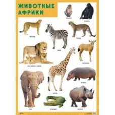 Животные Африки. Плакат. 500x690 мм