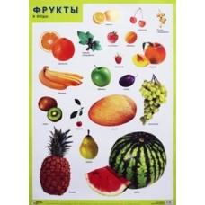 Фрукты и ягоды. Плакат. 500x690 мм