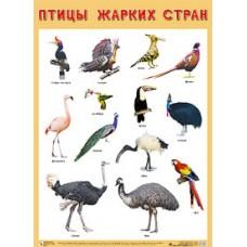 Птицы жарких стран. Плакат. 500x690 мм