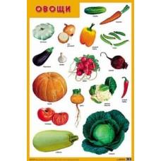 Овощи. Плакат. 500x690 мм