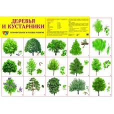 Деревья и кустарники. Демонстрационный плакат. Формат А2
