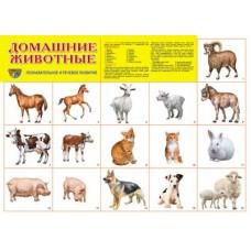 Домашние животные. Демонстрационный плакат. Формат А2