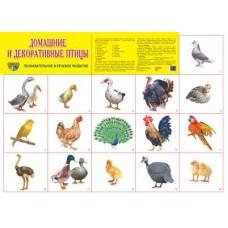 Домашние и декоративные птицы. Демонстрационный плакат. Формат А2