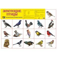 Зимующие птицы. Демонстрационный плакат. Формат А2