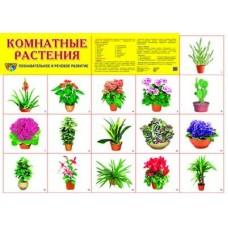 Комнатные растения. Демонстрационный плакат. Формат А2