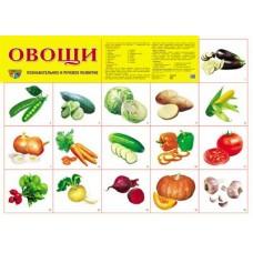 Овощи. Демонстрационный плакат. Формат А2